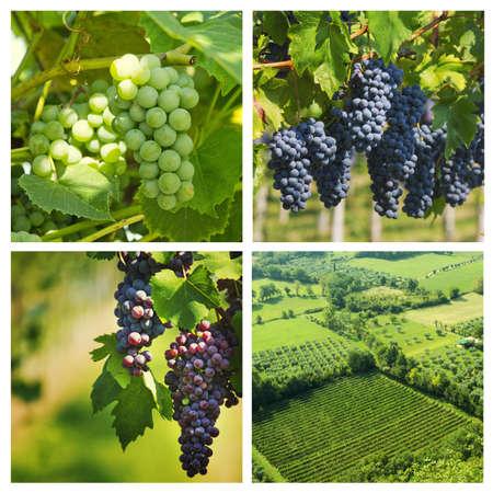 Collage of grape