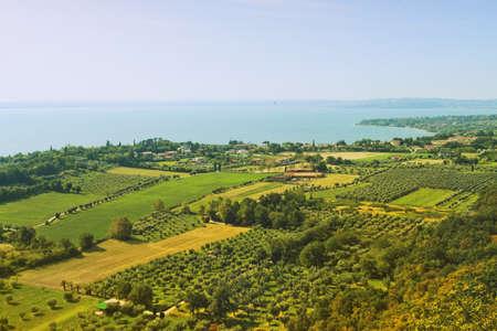 wijngaard van de druif Stockfoto
