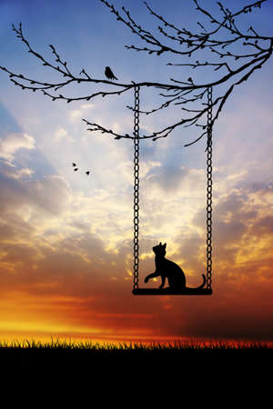 Cat on swing photo