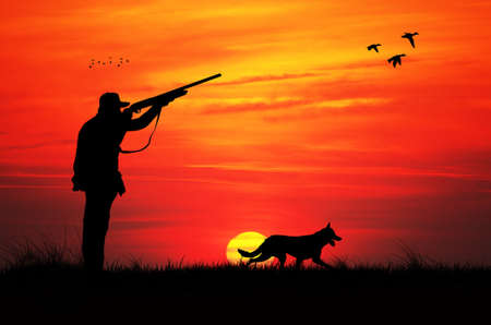 hunting dog: hunting at sunset Stock Photo