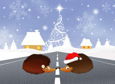Family of hedgehogs at Christmas photo