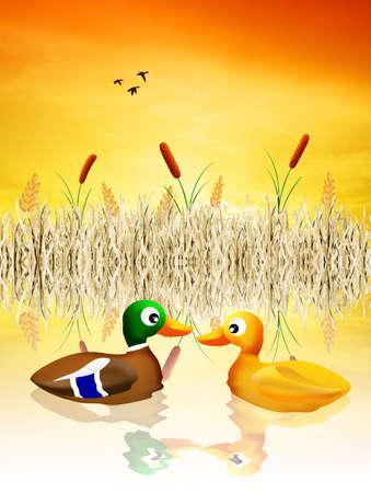 illustration of ducks in the pond illustration