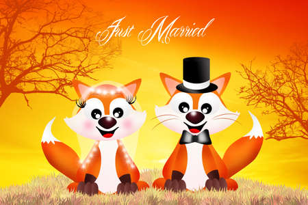 Wedding of red foxes photo