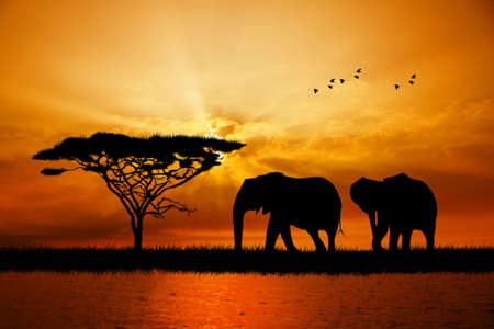 elephant silhouette at sunset photo