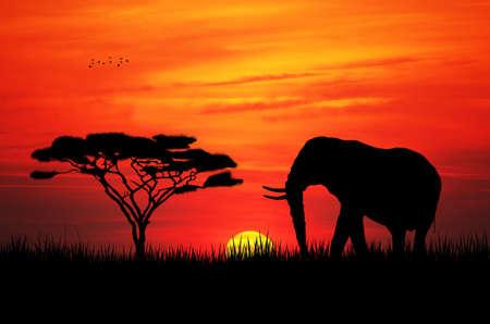 serengeti: elephant at sunset