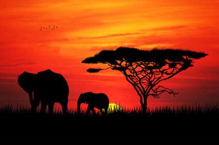 elephant at sunset photo