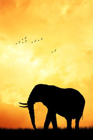 serengeti: Elephant silhouette