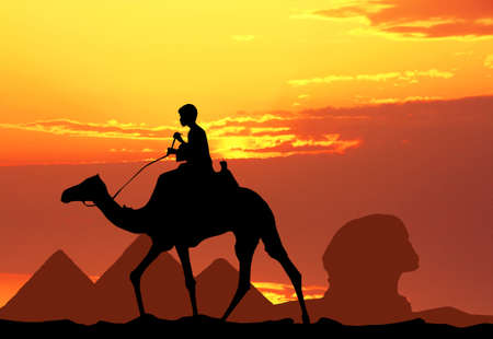 camel in Egypt photo