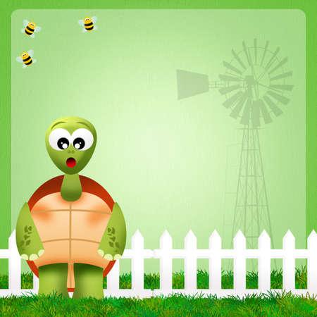 illustration of turtle illustration