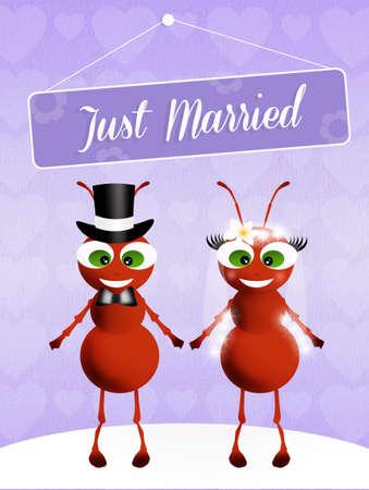 Wedding of ants photo