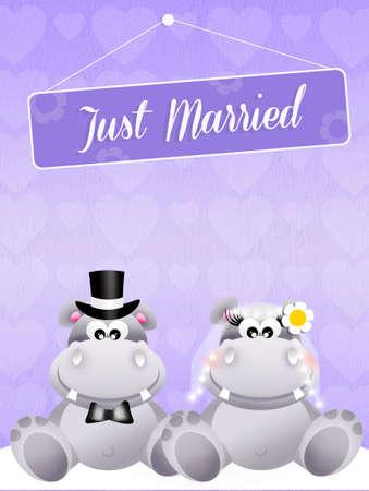 Wedding of hippos