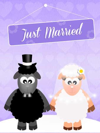 Wedding of sheeps photo