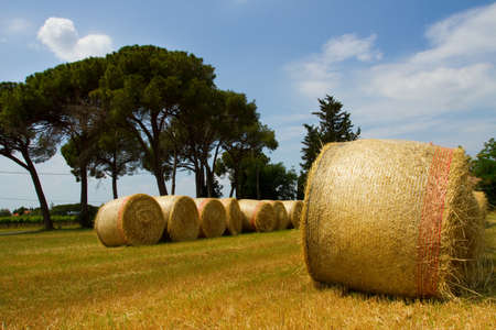 hayfield in Tuscany photo