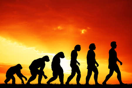 Human evolution photo