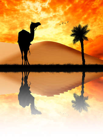nomad: Camel in the desert Stock Photo