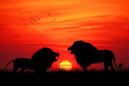 Lions silhouette photo