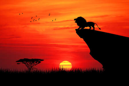 Lion on rope at sunset Stock Photo