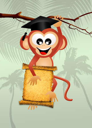qualify: monkey graduate Stock Photo