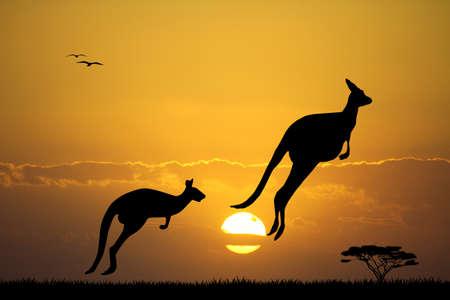 kangoeroes bij zonsondergang Stockfoto