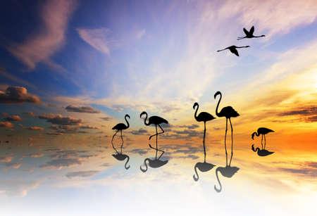 flamingos: pink flamingos at sunset