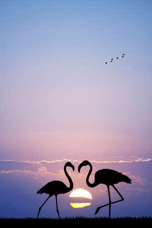 flamingos: pink flamingos Stock Photo