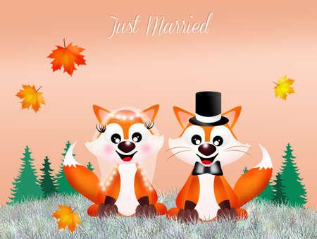 wedding of red fox photo