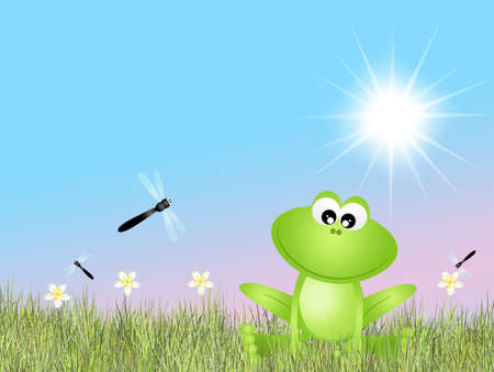 frog and dragonflies photo