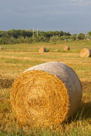 hay field: Fieno campo in Toscana