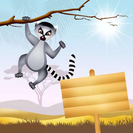 lemur: Lemur Stock Photo