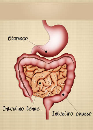 small bowel: intestine