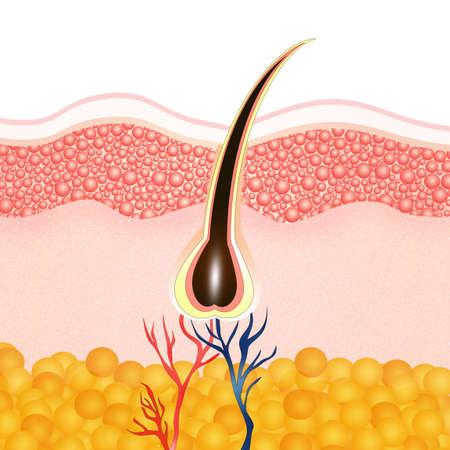 melanin: hair removal