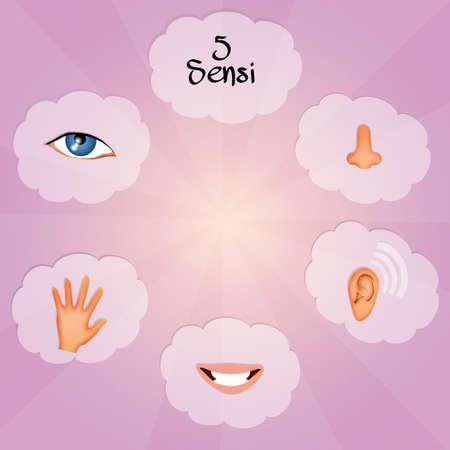 sniff: Five Senses