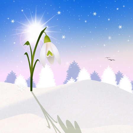 snowdrop: snowdrop
