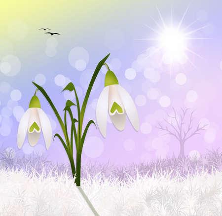 snowdrop: snowdrop in the snow