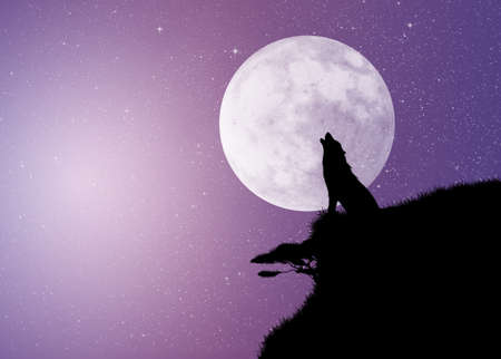 wolf in th moonlight