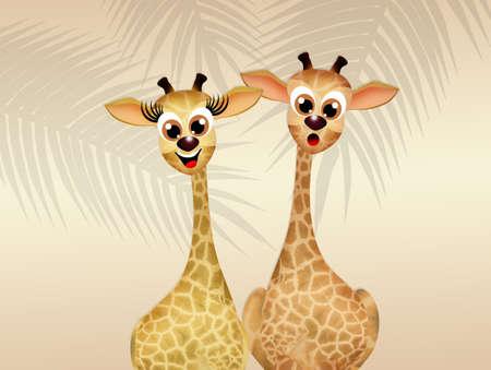 Giraffe in love photo