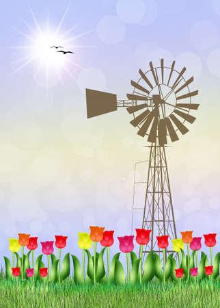 farmland: tulips field in the farmland