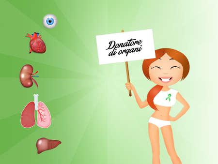 donacion de organos: donante de �rganos
