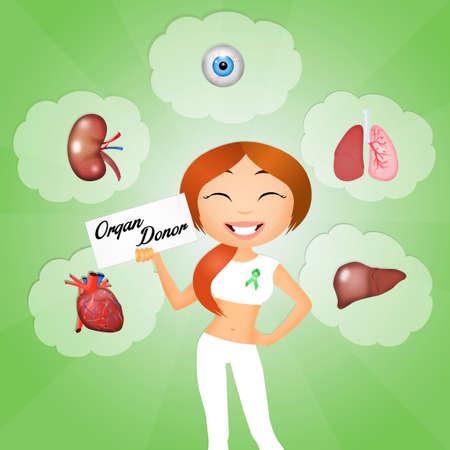 donacion de organos: Donante de �rganos Foto de archivo
