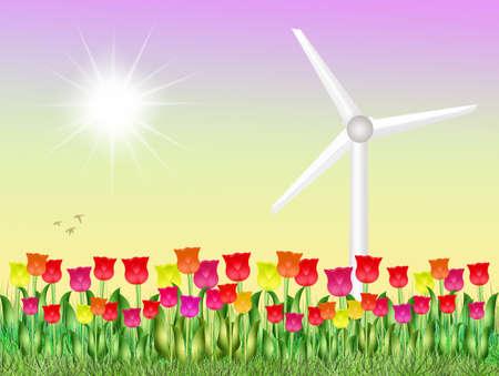 eolic: eolic in tulips field