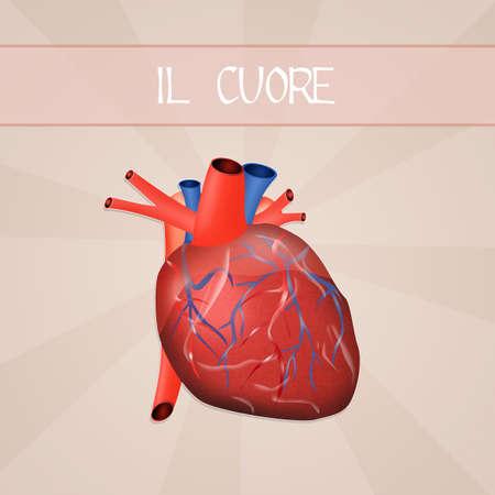 transplant: The heart Stock Photo