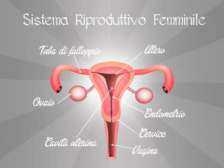 reproductive system: female reproductive system