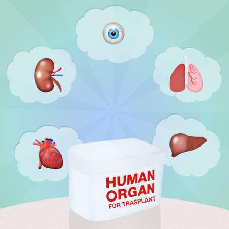 Human organ for trasplant
