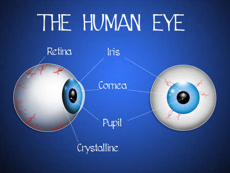 optic nerve: The human eye Stock Photo