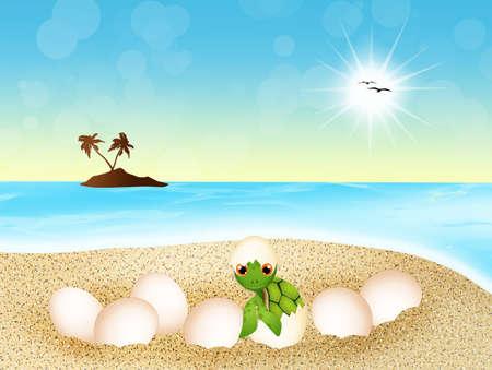 sea turtle: sea turtle lays eggs on the beach