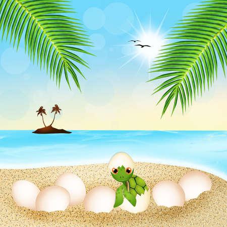 sea turtle: sea turtle eggs on the beach