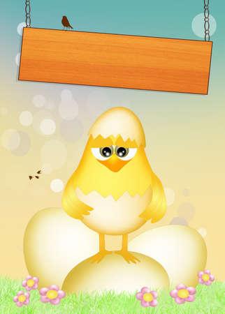 chicks: Polluelos en los huevos