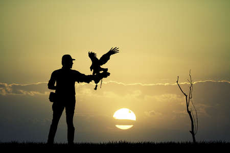 rapacious: falconer man at sunset