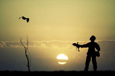 falconry: falconry at sunset