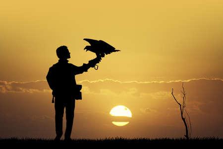 rapacious: falconer at sunset